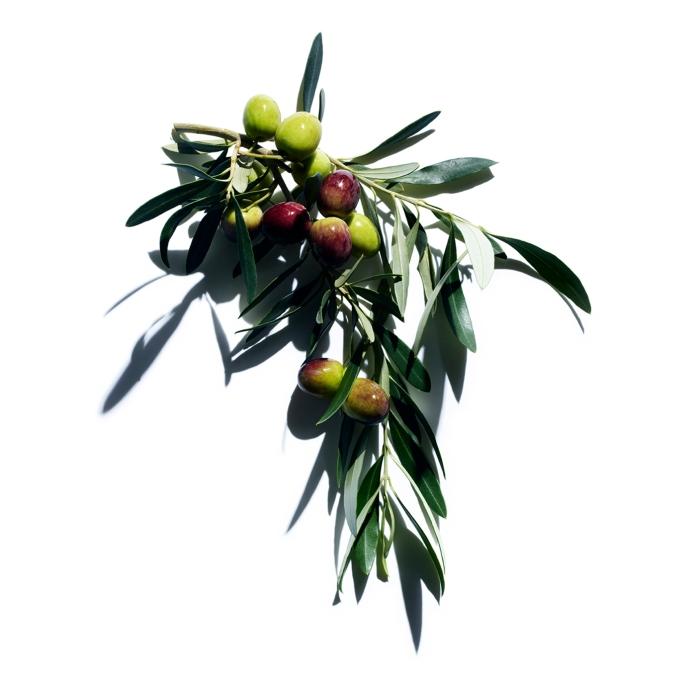 Belissima-Clarins-Olijf-Extract